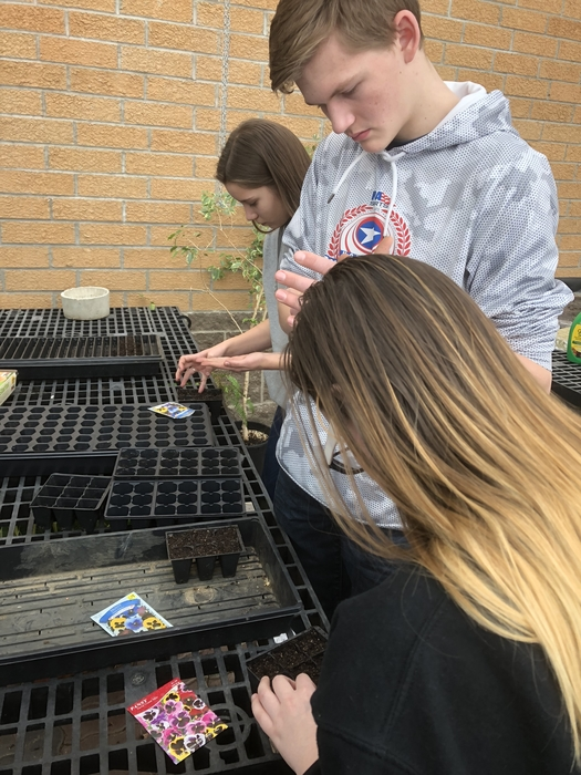 Horticulture students plant pansy seeds.